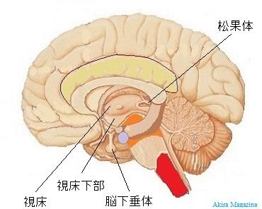 間脳のおはなし