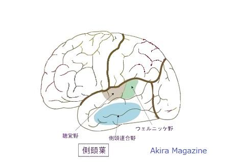 大脳皮質のおはなし | 大脳皮質 ...