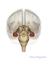 大脳辺縁系のおはなし