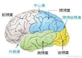 大脳皮質のおはなし   大脳皮質 ...