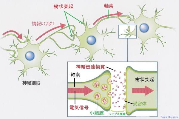 神経網とは